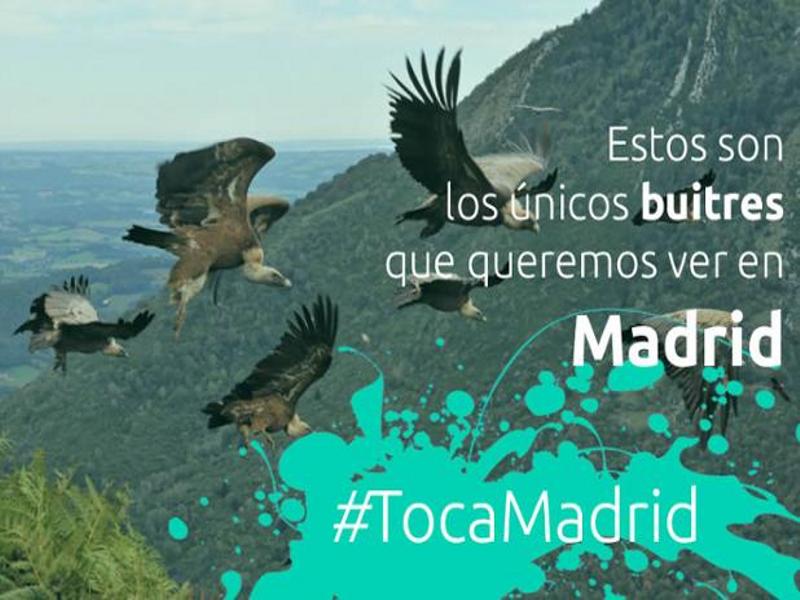 Estos son los únicos buitres que queremos ver en Madrid | #TocaMadrid