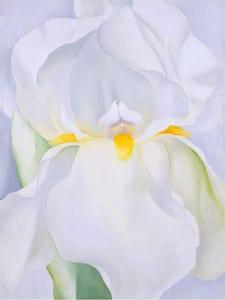 'Hortus Conclusus' | Museo Thyssen-Bornemisza | Madrid | 28/06-02/10/2016 | 'Lirio blanco nº 7' ('White iris') | 1957 | Georgia O'Keeffe