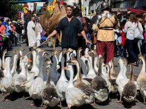 18 Mercado Cervantino | Alcalá de Henares | Comunidad de Madrid | 07-12/10/2016 | Ocas, burros y dromedarios