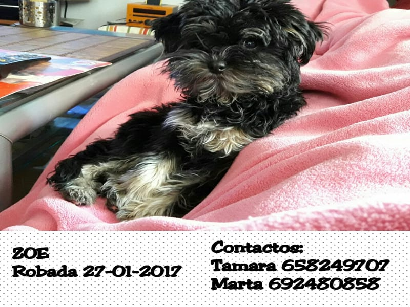 Zoe | Perrita robada | 27/01/2017