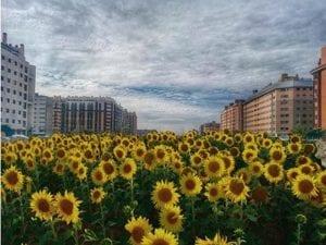 129 barrios en Madrid | Ensanche de Vallecas | Villa de Vallecas | Madrid | Avenida de girasoles en el PAU de Vallecas