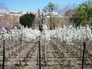 Campaña de recogida de árboles de Navidad | 07-31/01/2019 | Ayuntamiento de Madrid | Vivero Casa de Campo